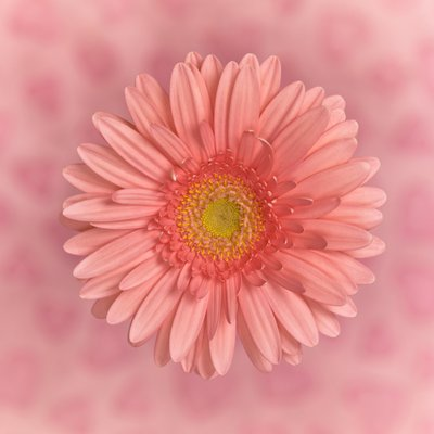 Close-up of Gerbera daisy on patterned background Wall Art & Canvas Prints by Assaf Frank