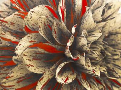 Extreme Close-up of Dahlia Petals Fine Art Print by Assaf Frank