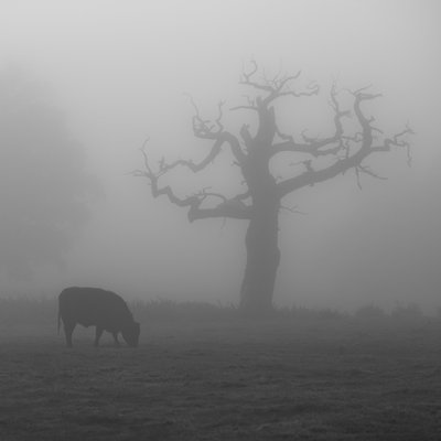 Single Tree in mist and fog Fine Art Print by Assaf Frank