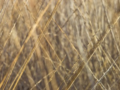 Grass close-up full frame Fine Art Print by Assaf Frank