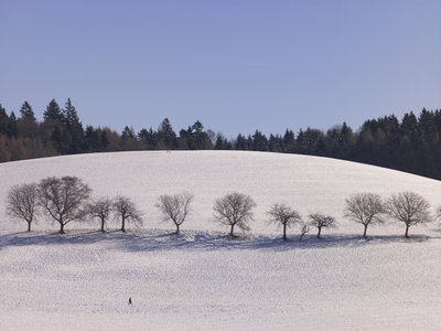 Row of trees on hill with snow Fine Art Print by Assaf Frank