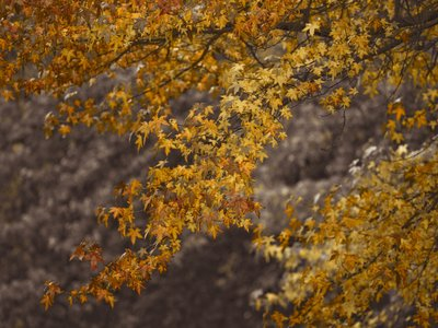 Autumn coloured leaves Wall Art & Canvas Prints by Assaf Frank