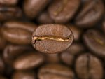 Top view of coffee beans Fine Art Print by Max Ferguson