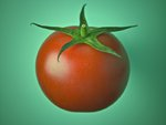 Tomato Wall Art & Canvas Prints by Assaf Frank