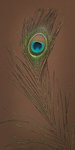 Single Peacock feather Postcards, Greetings Cards, Art Prints, Canvas, Framed Pictures & Wall Art by Assaf Frank