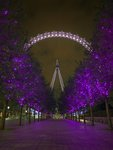 London Eye at night Wall Art & Canvas Prints by English School