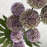 Allium flowers arrangement, close-up Fine Art Print by William Henry Hunt