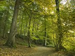 Forest pathway at autumn Wall Art & Canvas Prints by William Ireland