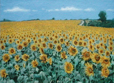 Field of Sunflowers, 2002 (oil on canvas) Fine Art Print by Alan Byrne