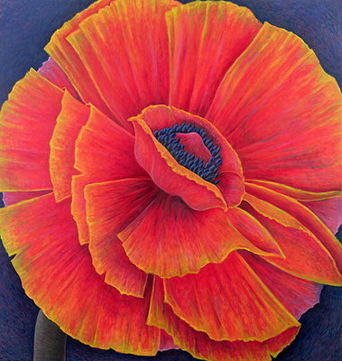 Big Poppy, 2003 (oil on canvas) Wall Art & Canvas Prints by Ruth Addinall
