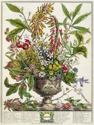 January, from `Twelve Months of Flowers', by Robert Furber (c.1674-1756) engraved by Henry Fletcher (colour engraving) Wall Art & Canvas Prints by Pieter Casteels