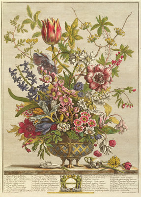 February, from `Twelve Months of Flowers' by Robert Furber (c.1674-1756) engraved by Henry Fletcher (colour engraving) Wall Art & Canvas Prints by Pieter Casteels