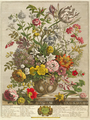 May, from 'Twelve Months of Flowers' by Robert Furber (c.1674-1756) engraved by Henry Fletcher (colour engraving) Postcards, Greetings Cards, Art Prints, Canvas, Framed Pictures & Wall Art by Pieter Casteels