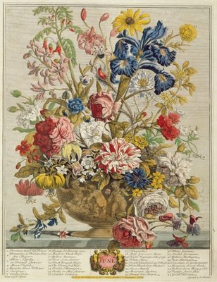 June, from 'Twelve Months of Flowers' by Robert Furber (c.1674-1756) engraved by Henry Fletcher (colour engraving) Postcards, Greetings Cards, Art Prints, Canvas, Framed Pictures & Wall Art by Pieter Casteels