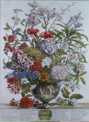 July, from 'Twelve Months of Flowers' by Robert Furber (c.1674-1756) engraved by Henry Fletcher (colour engraving) Postcards, Greetings Cards, Art Prints, Canvas, Framed Pictures & Wall Art by Pieter Casteels