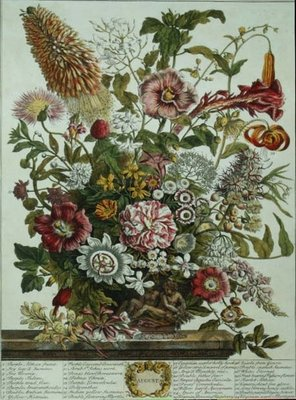 August, from 'Twelve Months of Flowers' by Robert Furber (c.1674-1756) engraved by Henry Fletcher (colour engraving) Postcards, Greetings Cards, Art Prints, Canvas, Framed Pictures & Wall Art by Pieter Casteels