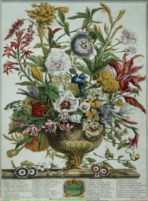 September, from 'Twelve Months of Flowers' by Robert Furber (c.1674-1756) engraved by Henry Fletcher (colour engraving) Postcards, Greetings Cards, Art Prints, Canvas, Framed Pictures & Wall Art by Pieter Casteels