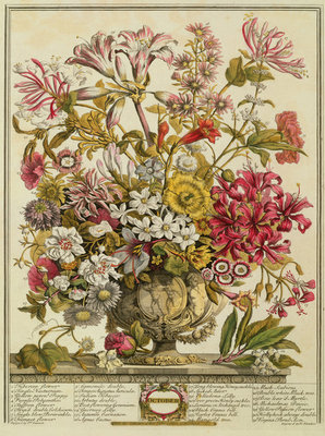 October, from 'Twelve Months of Flowers' by Robert Furber (c.1674-1756) engraved by Henry Fletcher (colour engraving) Postcards, Greetings Cards, Art Prints, Canvas, Framed Pictures & Wall Art by Pieter Casteels