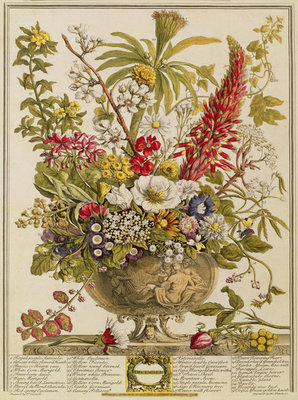 December, from 'Twelve Months of Flowers' by Robert Furber (c.1674-1756) engraved by Henry Fletcher (colour engraving) Wall Art & Canvas Prints by Pieter Casteels