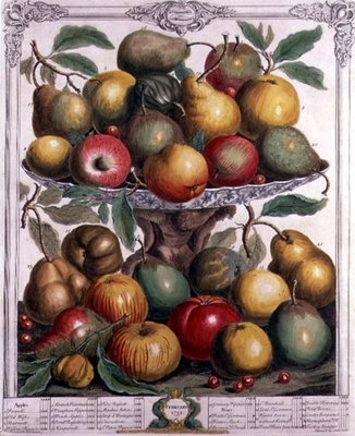 February, from 'Twelve Months of Fruits', by Robert Furber Fine Art Print by Pieter Casteels
