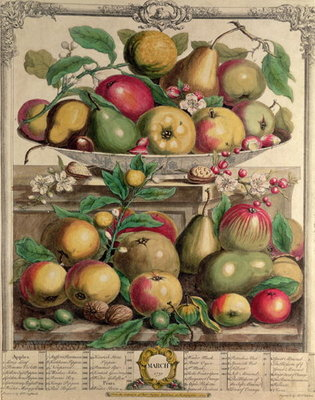 March, from 'Twelve Months of Fruits', by Robert Furber Fine Art Print by Pieter Casteels