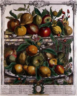 April, from 'Twelve Months of Fruits', by Robert Furber Fine Art Print by Pieter Casteels