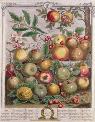 May, from 'Twelve Months of Fruits', by Robert Furber (c.1674-1756) engraved by Henry Fletcher, 1732 (colour engraving) Postcards, Greetings Cards, Art Prints, Canvas, Framed Pictures & Wall Art by Pieter Casteels