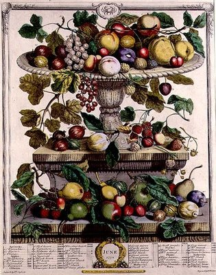 June, from 'Twelve Months of Fruits', by Robert Furber (c.1674-1756) engraved by Henry Fletcher, 1732 (colour engraving) Postcards, Greetings Cards, Art Prints, Canvas, Framed Pictures & Wall Art by Pieter Casteels