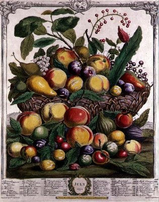 July, from 'Twelve Months of Fruits', by Robert Furber (c.1674-1756) engraved by Henry Fletcher, 1732 (colour engraving) Postcards, Greetings Cards, Art Prints, Canvas, Framed Pictures & Wall Art by Pieter Casteels