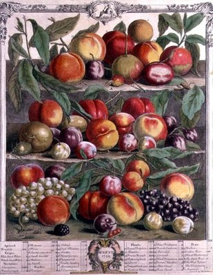 August, from 'Twelve Months of Fruits', by Robert Furber (c.1674-1756) engraved by C. Du Bose, 1732 (colour engraving) Postcards, Greetings Cards, Art Prints, Canvas, Framed Pictures & Wall Art by Pieter Casteels