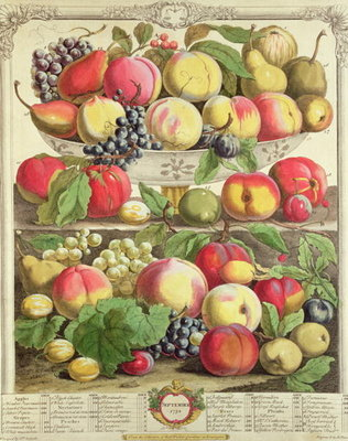 September, from 'Twelve Months of Fruits', by Robert Furber Fine Art Print by Pieter Casteels