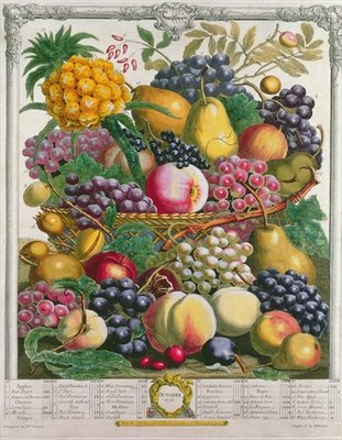 October, from 'Twelve Months of Fruits', by Robert Furber (c.1674-1756) engraved by Henry Fletcher, 1732 (colour engraving) Postcards, Greetings Cards, Art Prints, Canvas, Framed Pictures & Wall Art by Pieter Casteels