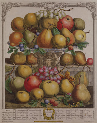 December, from 'Twelve Months of Fruits', by Robert Furber (c.1674-1756) engraved by Henry Fletcher, 1732 (colour engraving) Postcards, Greetings Cards, Art Prints, Canvas, Framed Pictures & Wall Art by Pieter Casteels