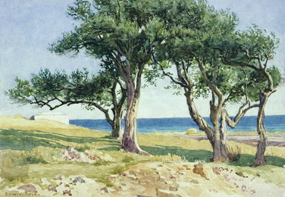 Old Olive Trees, Bordighera Fine Art Print by Edwin Bale