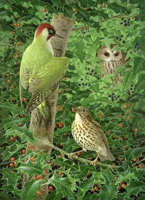 Woodpecker, Owl and Thrush Fine Art Print by Birgitte Hendil