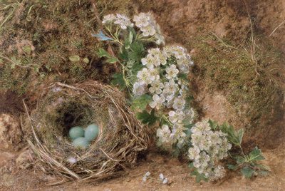 May Blossom and a Hedge Sparrow's Nest, 1845 Wall Art & Canvas Prints by William Henry Hunt