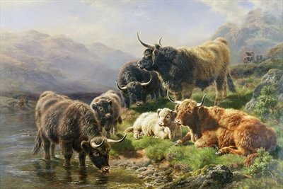 Highland Cattle Fine Art Print by William Watson