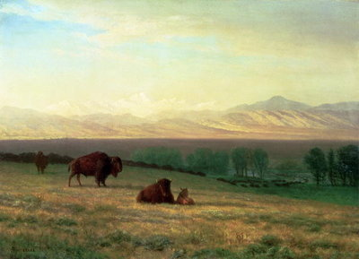 Buffalo on the Plains, c.1890 Fine Art Print by Albert Bierstadt