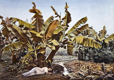 A banana and manioc plantation in New Caledonia, late 19th century Fine Art Print by French School