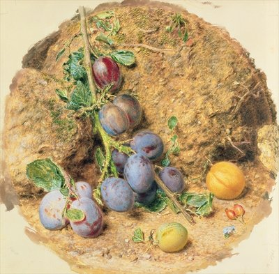 Plums Wall Art & Canvas Prints by William Henry Hunt