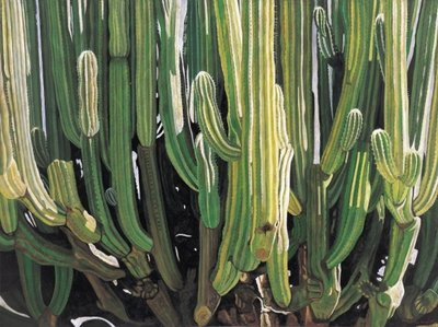 Large Candelabro Cactus in Oaxaca, 2003 Wall Art & Canvas Prints by Pedro Diego Alvarado
