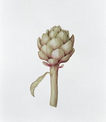 Artichoke, 1999 (pencil on paper) Wall Art & Canvas Prints by Diana Everett