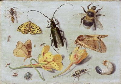Insects Fine Art Print by Jan van, the Elder Kessel