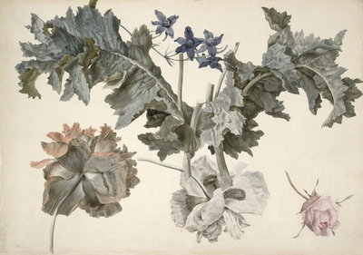 PD.424-1973 Double-flowered opium poppies, poppy leaves, delphinium and a rosebud (w/c) Fine Art Print by Eelke-Jelles Eelkema