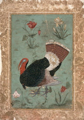 Turkey, Mughal Poster Art Print by Indian School
