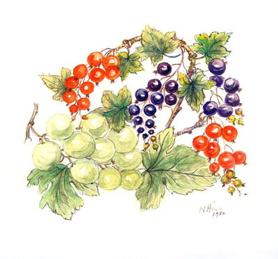 Black and Red Currants with Green Grapes, 1986 Fine Art Print by Nell Hill