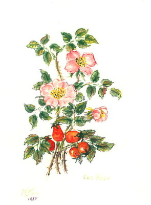 Dog Rose, 1980 Fine Art Print by Nell Hill