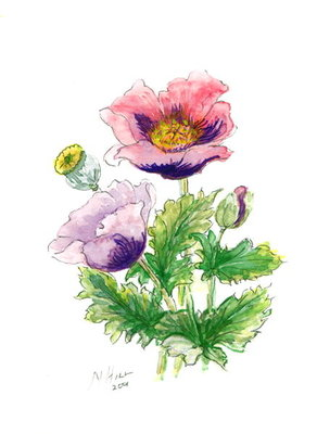 Opium Poppy, 2001 Fine Art Print by Nell Hill