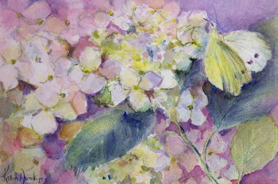 Pale Clouded Yellow Butterfly, Colias Hyale on Hydrangea Fine Art Print by Karen Armitage