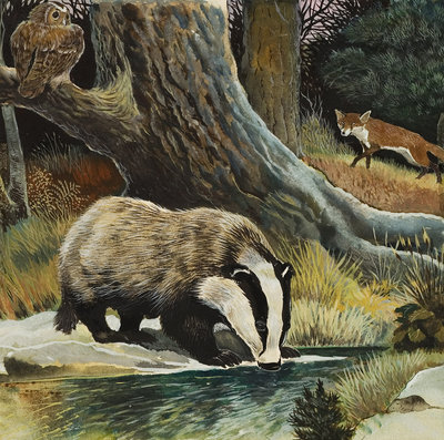 Badger, Fox, Owl and Mouse (gouache on paper) Wall Art & Canvas Prints by .